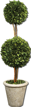 Uttermost 60106 - Uttermost Two Sphere Topiary Preserved Boxwood